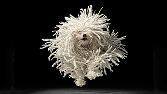 Ps_spotlight_tim-flach